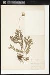 Helen J. Monahan Botanical Survey Page Image 73 by Helen J. Monahan