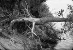 Flood scenery, construction negatives by Cal R. Fremling