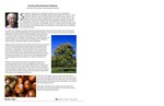 A Look at the American Chestnut by Bill Meyer
